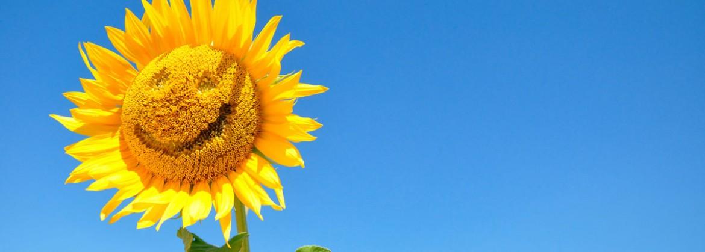Sonnenblume mit Gesicht